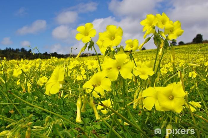 Fiori Gialli Da Campo.Dekor Gula Blommor Falt Pixers Vi Lever For Forandring