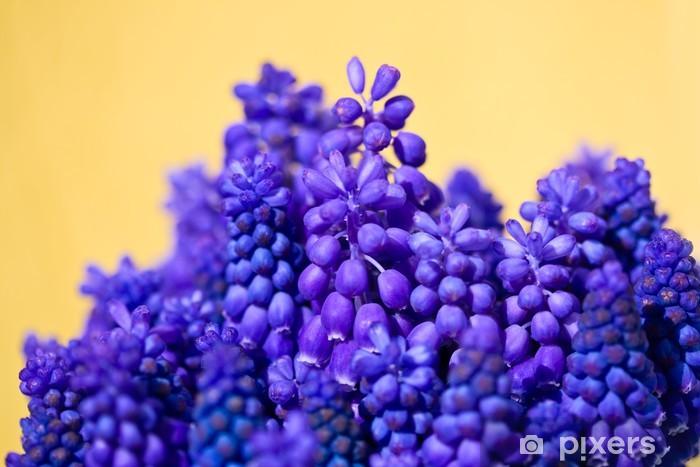 Naklejka Pixerstick Hiacynty winogron kiść na żółtym tle - Kwiaty