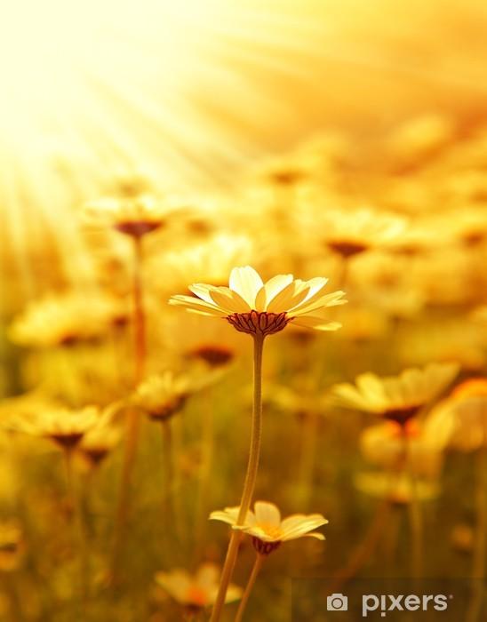 Carta da Parati in Vinile Daisy campo di fiori sopra il tramonto -