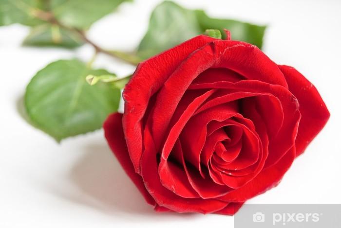 Vinyl-Fototapete Big rote Rose. - Paare