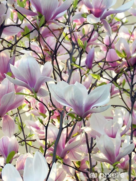 Boom Met Bloemen.Fotobehang Vinyl Roze Bloemen Van Magnolia Boom