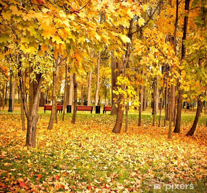 Fototapeta winylowa Żywy żółty park leśny - Budynki użyteczności publicznej