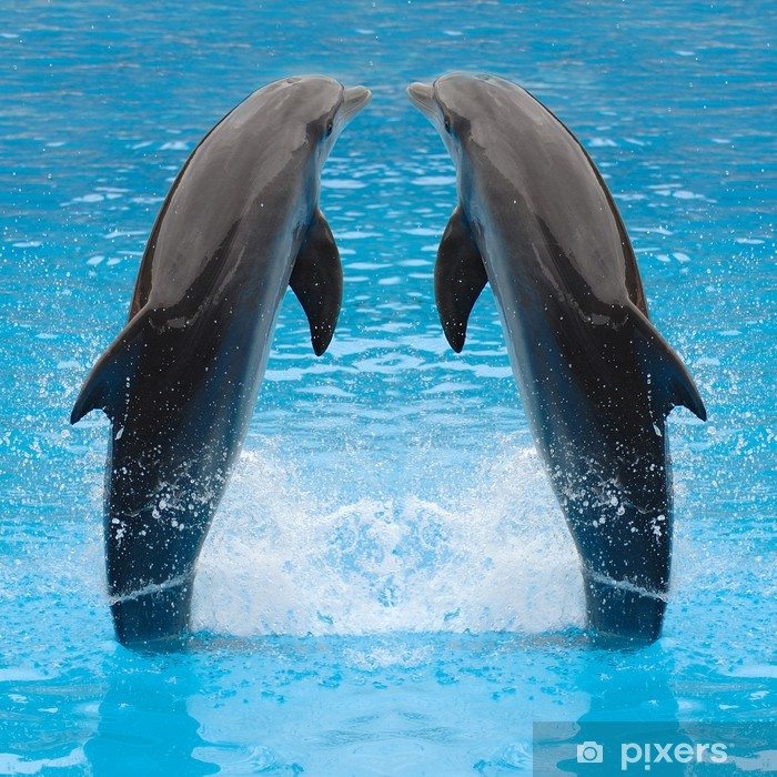 Vinyl Fotobehang Dolfijn tweelingen - Thema's