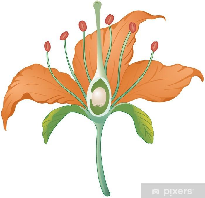 Fototapete Blütenteile Querschnitt • Pixers® - Wir leben