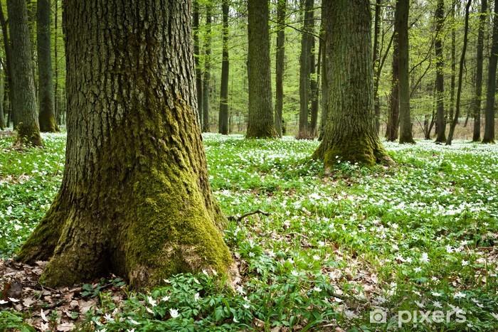 Pixerstick Aufkleber Moosbedeckte alte Baum und weiße Anemonen im Wald - Ökologie