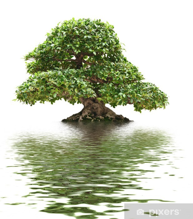 Ficus bonsai with water reflection Vinyl Wall Mural - Trees