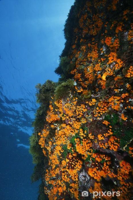 Vinyl Fotobehang Zee madeliefjes bloeien parazoantos aquarium - Onderwater