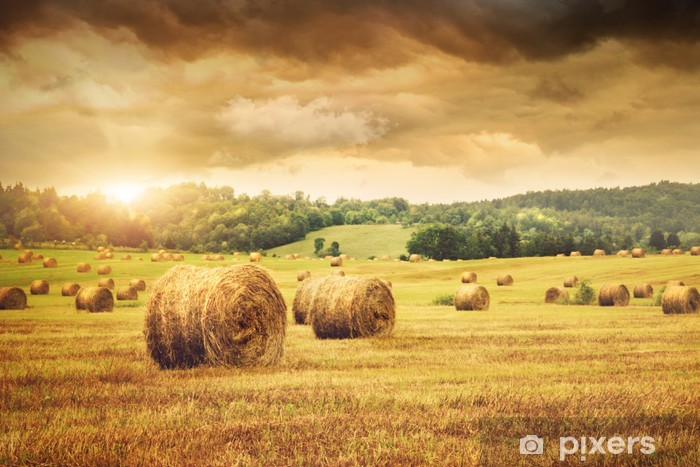 Field of freshly bales of hay with beautiful sunset Pixerstick Sticker - Themes