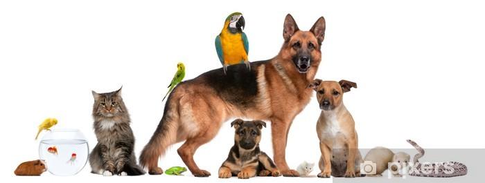 Ryhmä lemmikkejä istuu edessä valkoisella taustalla Vinyyli valokuvatapetti - Nisäkkäät