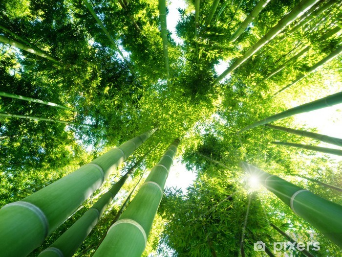 bamboo forest Self-Adhesive Wall Mural - Themes