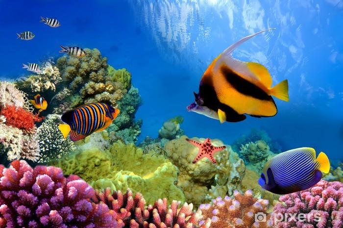 Vinilo Pixerstick La vida marina en el arrecife de coral - Destinos