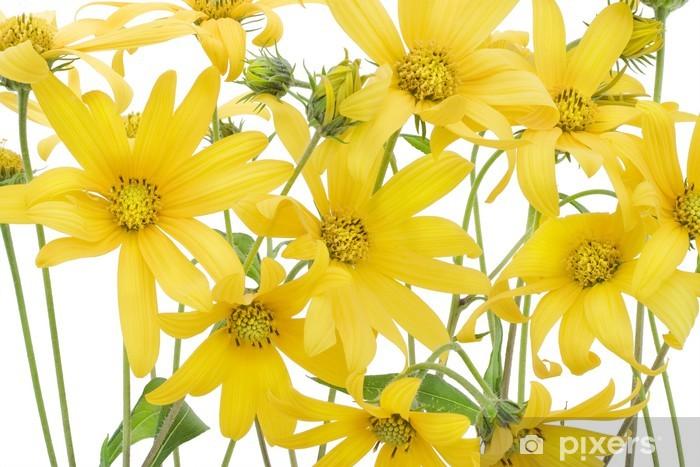 Naklejka Pixerstick Topinambur żółte kwiaty w tle - Pory roku