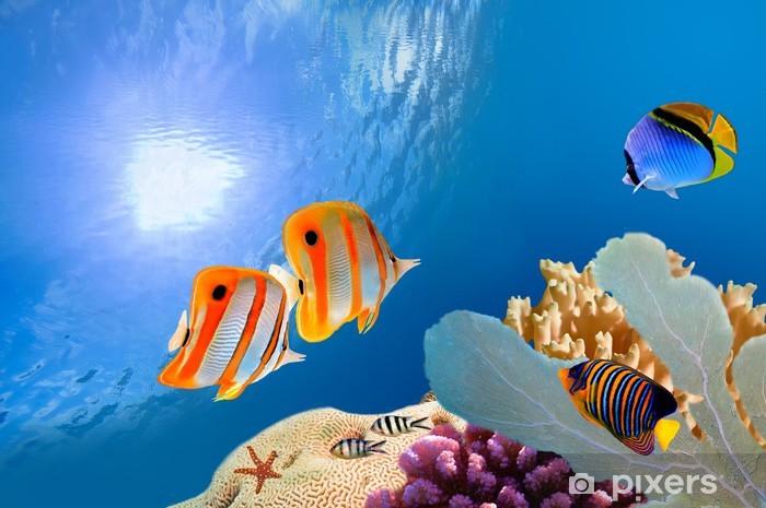 Fotomural Estándar Arrecifes de coral tropicales - Arrecife de coral