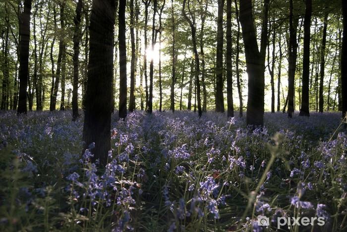 Sticker Pixerstick La lumière du soleil pénétrer dans un bois Bluebell - Saisons