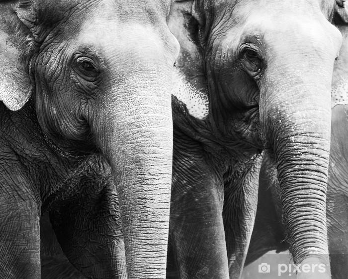 Fototapeta winylowa Tajski słonia 11 - Tematy