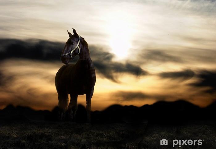 Papier peint vinyle Coucher de soleil et le cheval - Mammifères