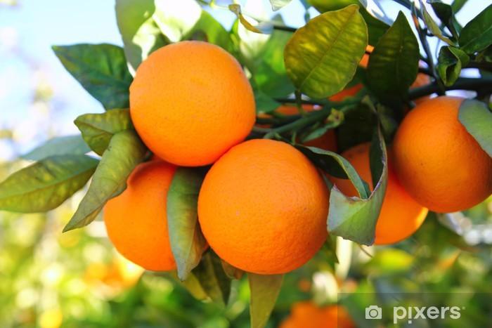 Vinyl Fotobehang Tak oranje boom vruchten groene bladeren in Spanje - Landbouw