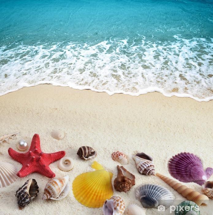 Fotomural Estándar Conchas de mar en la playa de arena - Agua
