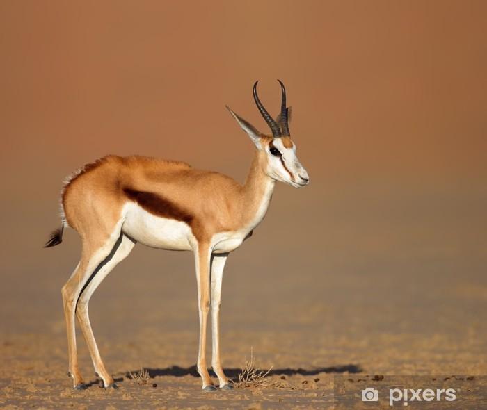 Naklejka Pixerstick Springbok na piaszczystej równiny pustyni - Ssaki