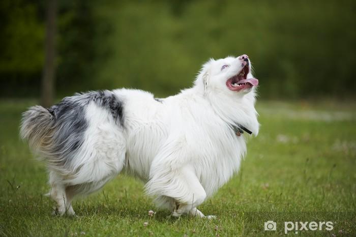 Ungarische hirtenhunde