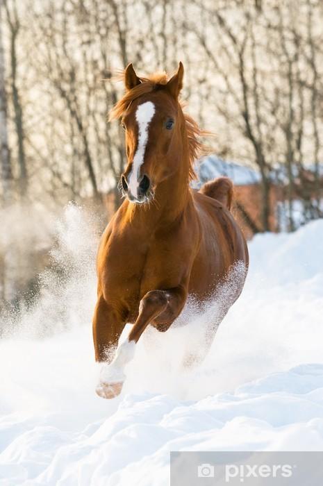 Fototapeta winylowa Red arabian stallion uruchamia galop w śniegu - Tematy