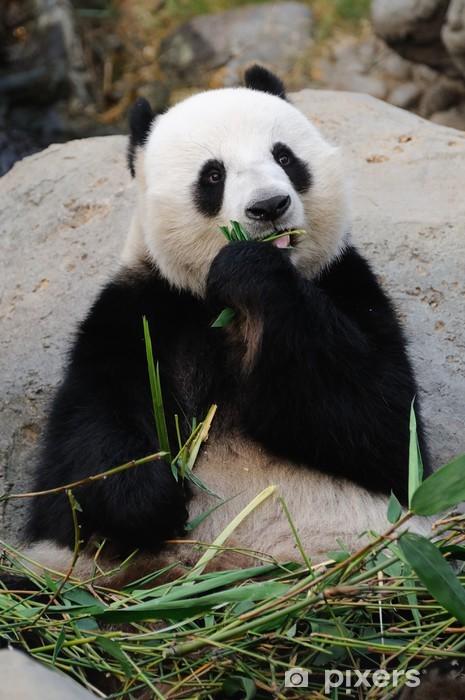 Papier peint vinyle Panda geant - Thèmes