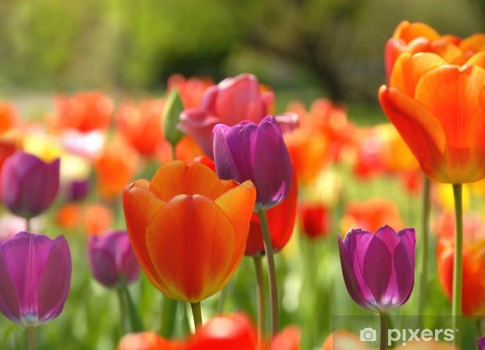 Vinilo Pixerstick Tulipss coloridas - Temas