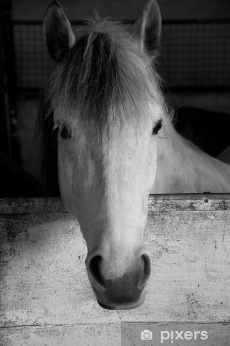 d143ef1e84057 Fototapete Schwarz-Weiß-Porträt von einem weißen Pferd • Pixers ...