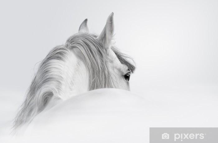 Carta da Parati in Vinile Cavallo andaluso in una nebbia - iStaging