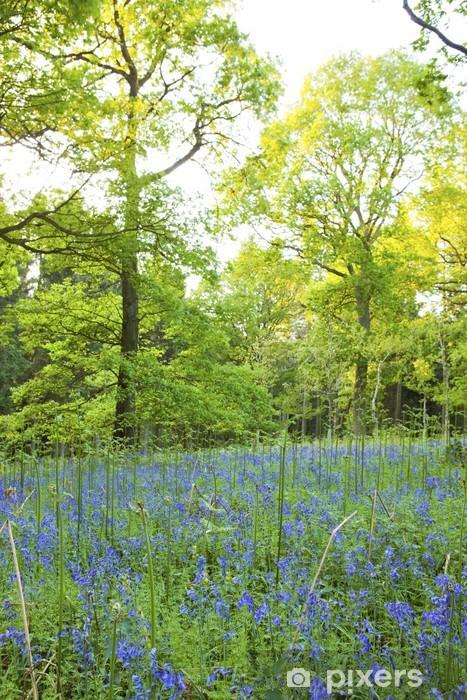Vinyl-Fototapete Bluebells im Wald, Lineover Holz, Cheltenham. - Bäume
