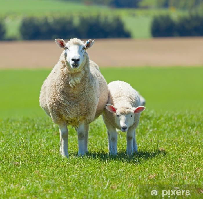 Papier peint vinyle Le pâturage des moutons - Mammifères
