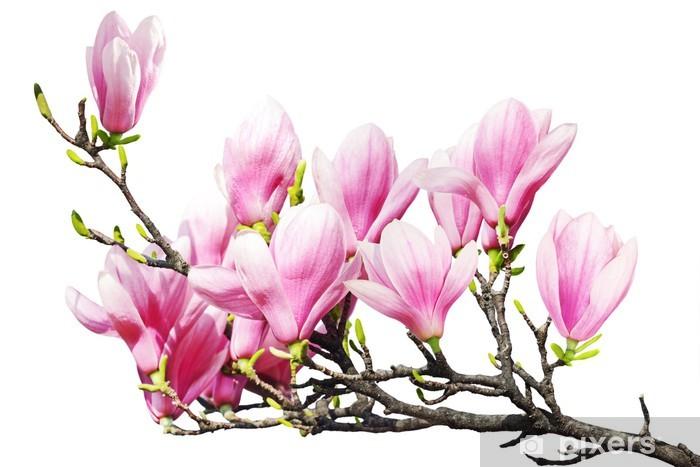 Sticker Pixerstick Magnolia - Plantes