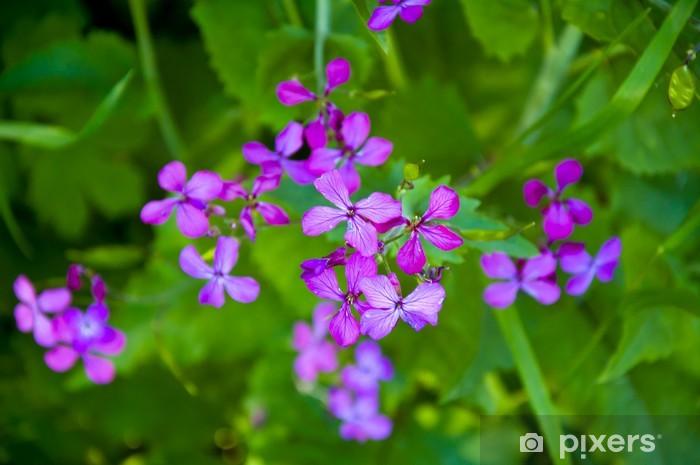 Piccoli Fiori Viola.Carta Da Parati Piccoli Fiori Viola Pixers Viviamo Per Il