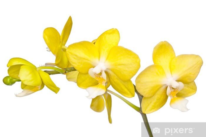 Sticker Pixerstick Yellow orchidee - Sticker mural