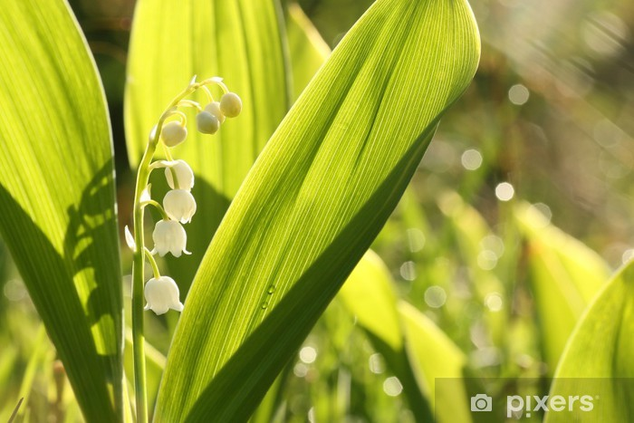 Fototapeta winylowa Konwalia w lesie - Kwiaty