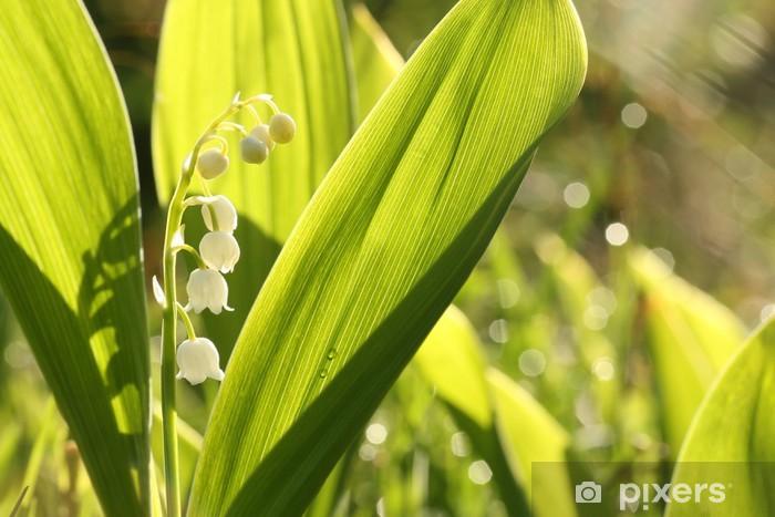 Naklejka Pixerstick Konwalia w lesie - Kwiaty