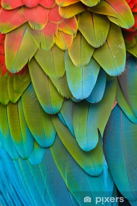 Çıkartması Pixerstick Renkli Macaw tüyler -