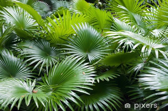 Tropisk regnskov palme baggrund Vinyl fototapet - Naturens Vidundere