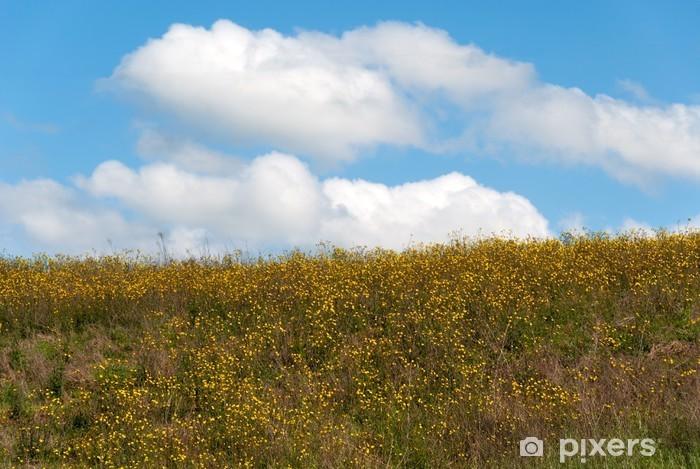 Fiori Gialli Toscana.Fiori Gialli E Cielo Azzurro Su Una Collina In Toscana Wall Mural