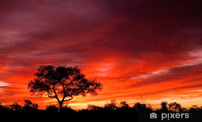 Vinyl Fotobehang Afrikaanse zonsondergang in het Kruger National Park, Zuid-Afrika - Thema's