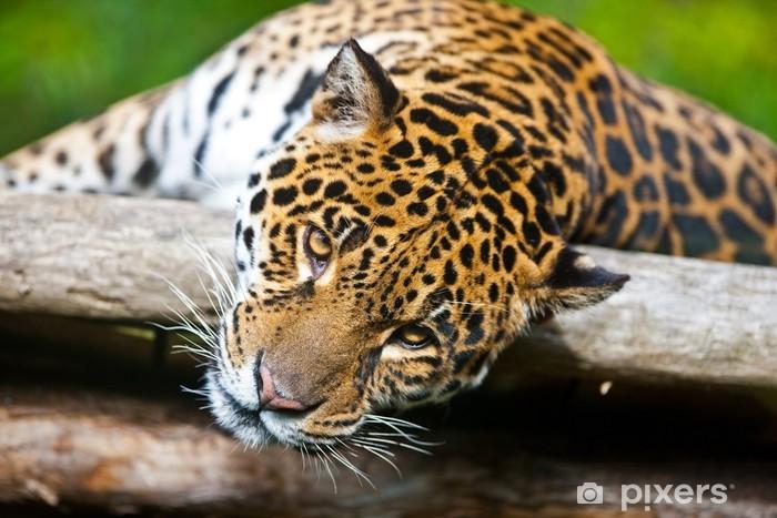 Nálepka Pixerstick Jaguar - Panthera onca - Savci