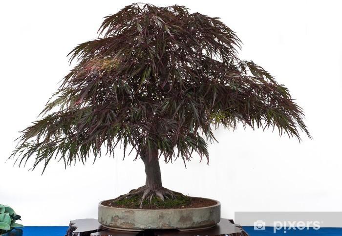 Acer palmatum atropurpureum als Bonsai Vinyl Wall Mural - Trees