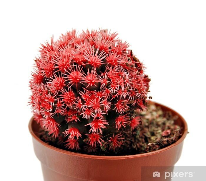 Sticker Pixerstick Cactus rojo - Fleurs