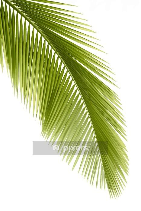 Adesivo da Parete Foglia di palma - Adesivo da parete