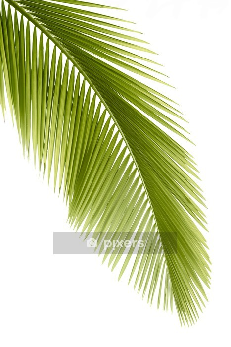 Palm leaf Wall Decal - Wall decals