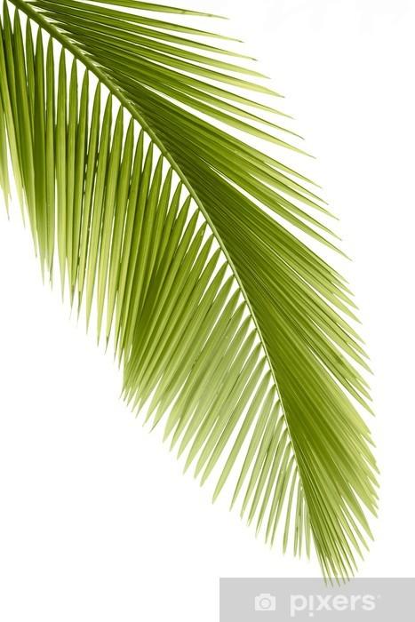 Fototapeta winylowa Liść palmowy - Naklejki na ścianę