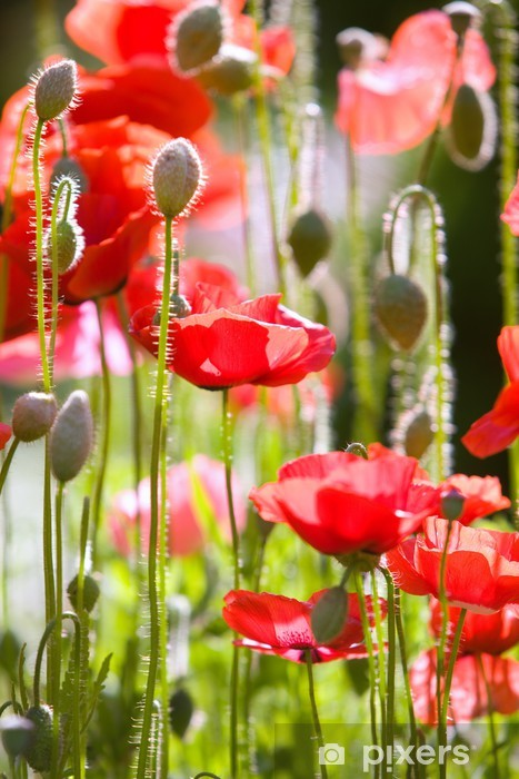 Sticker Pixerstick Poppies ornementales - Plantes