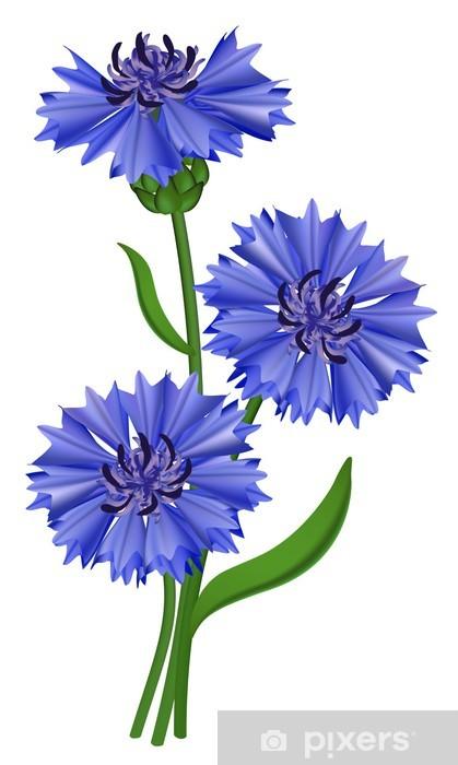 c258f521a6fc7d Fototapeta Kwiaty niebieski chaber. Ilustracji wektorowych. • Pixers ...