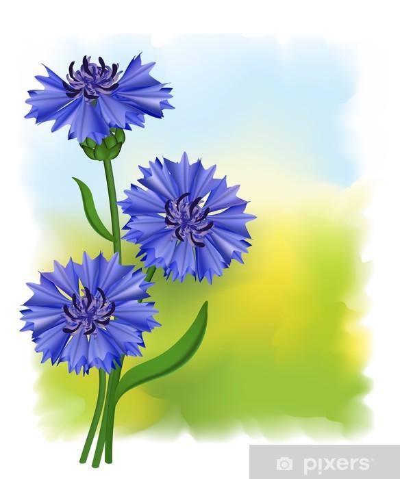 300a6dcb2956bd Fototapeta winylowa Kwiaty niebieski chaber (Centaurea cyanus). Ilustracji  wektorowych.