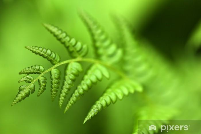 Papier peint vinyle Vert fougère - Plantes